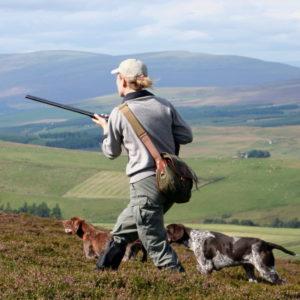 hjortejagt i scotland