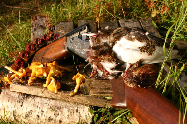 Kurs jegerprøvekurs Grouse & Gun