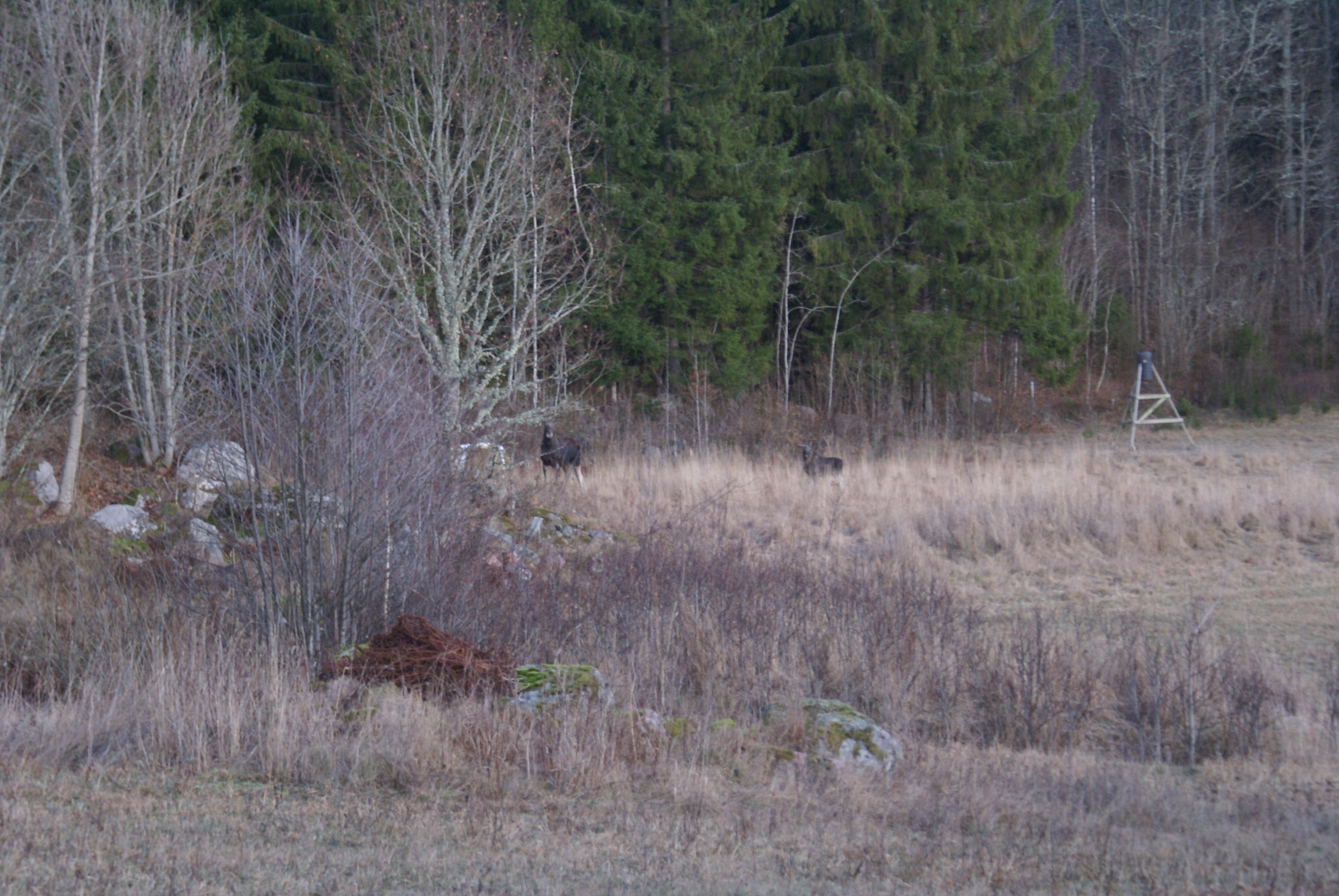 jakt i sverige